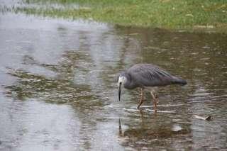 Tidal Flooding at NAC